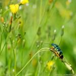 FA77で昆虫 #3