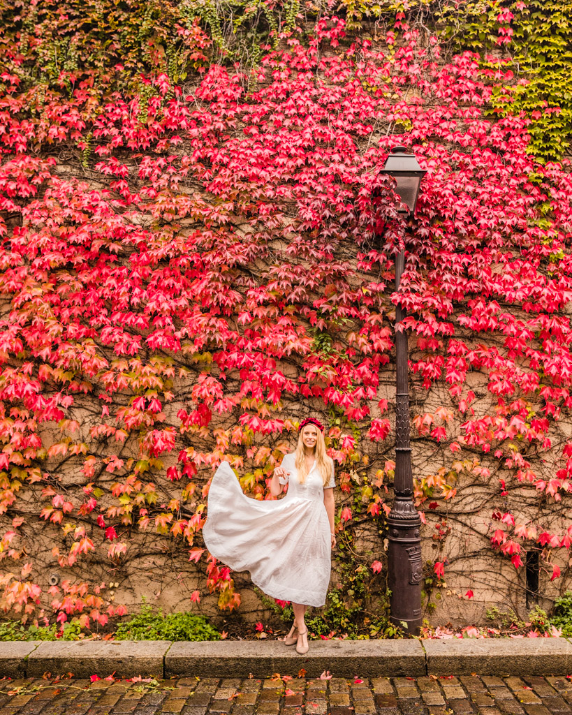 Ivy wall in Montmartre - Paris in fall