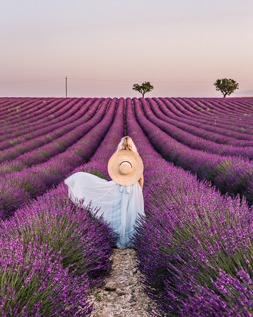 Lavender Field in Valensole, Provence - France