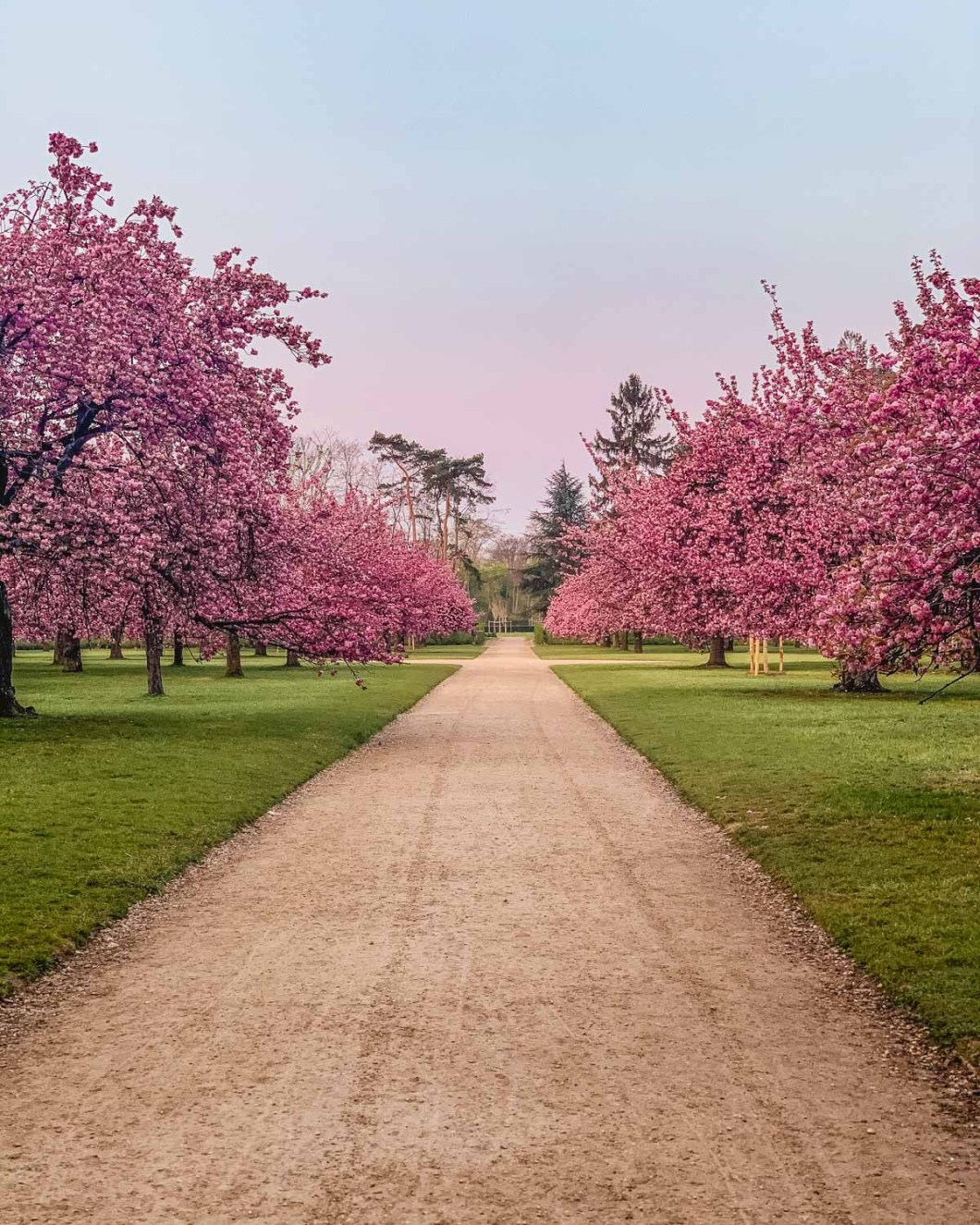 Cherry blossoms in the Parc de Sceaux - near Paris