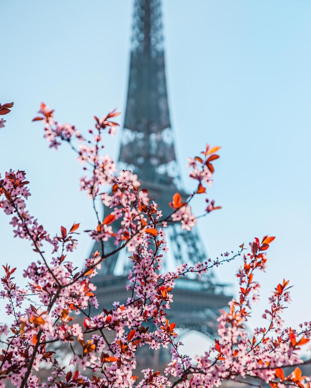 Plum blossoms at the Eiffel Tower in avenue de New York - Paris