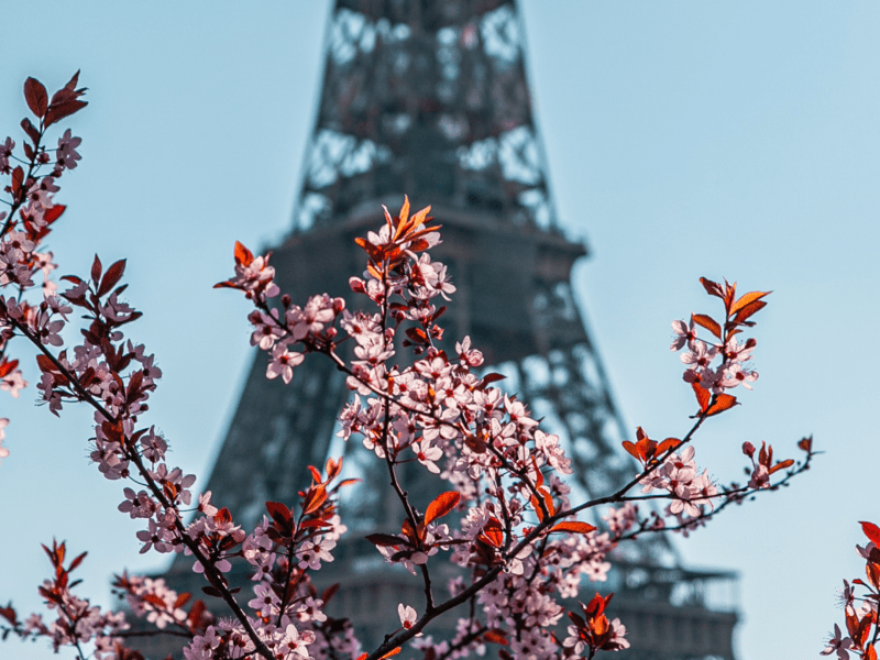 Spring in Paris - Plum blossoms at the Eiffel Tower