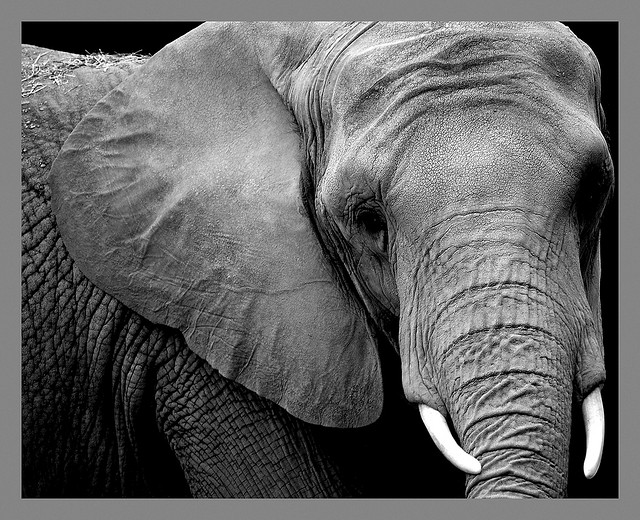 Blind men, an elephant, and labels