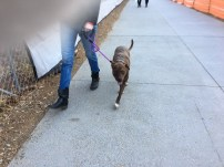 People run, walk, stroll and take their dogs for a bathroom break along the Beltline.
