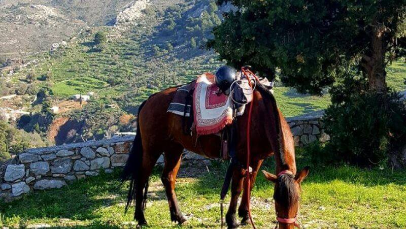 horse - 15 TOP THINGS TO DO IN HYDRA ISLAND GREECE