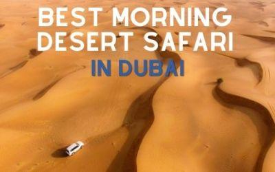 dessert safari min - HOME