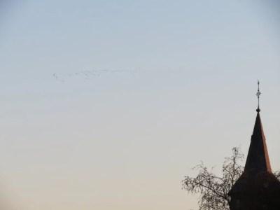Kraanvogel1