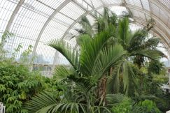 Upstairs In The Palm House