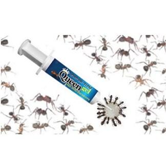 פתיון להדברת נמלים מזרק Queen gel
