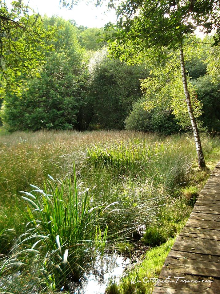 Les marais - The marshlands - Lac de Saint-Pardoux en Haute-Vienne