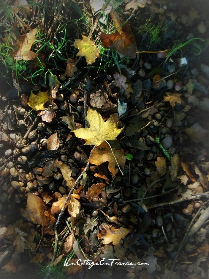 Feuille d'automne - un cottage en france 1