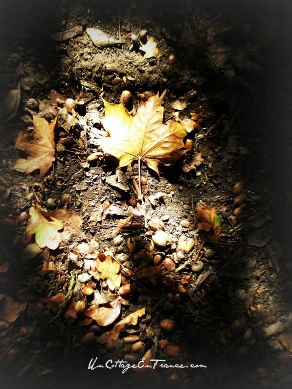 Feuille d'automne - Un Cottage en France
