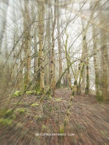 Promenade dans les bois en Limousin