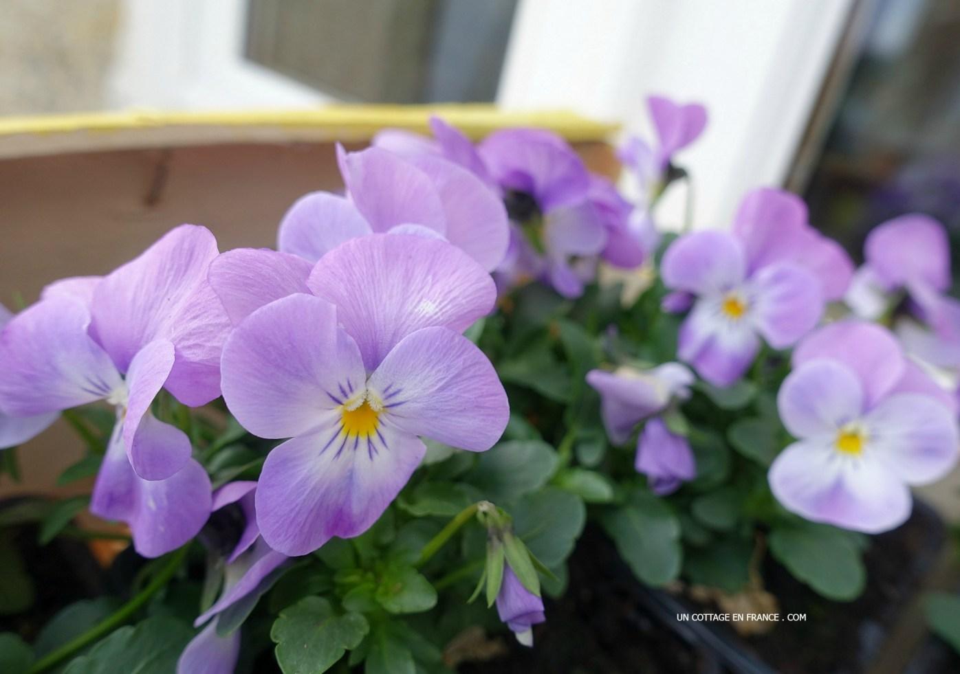 Blog maison et jardin, cottage de france