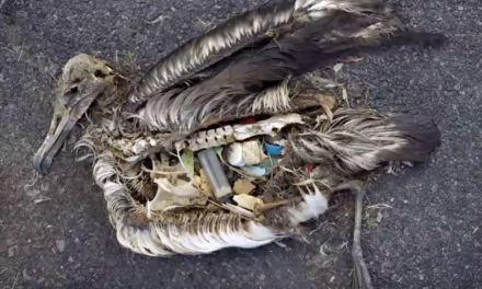 Limpar os oceanos – o que fazemos