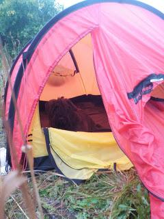 Nammatj 2, tältliv, cykeltur, långtur med hund, cykelkärra för hund