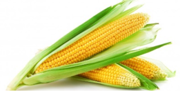 Corn 3 ears for $1.00