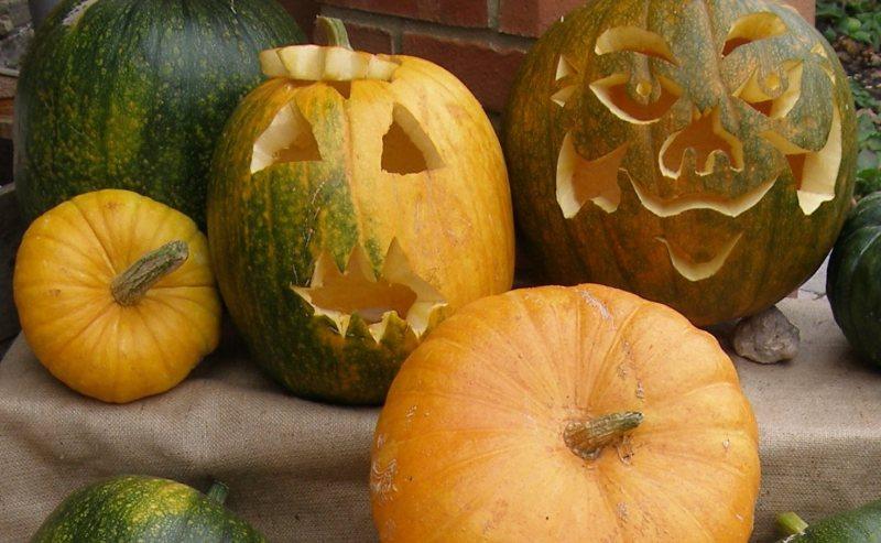 pumpkins5-LINCOLNITE-SIZED