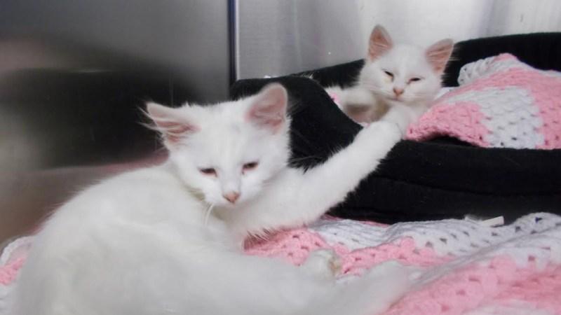 dumped_kittens_1