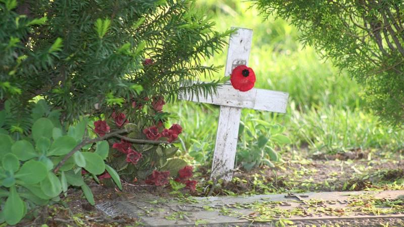 remembrance_poppy_stock