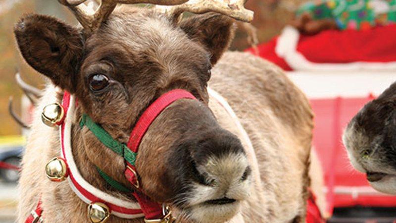 reindeer_gainsbourough