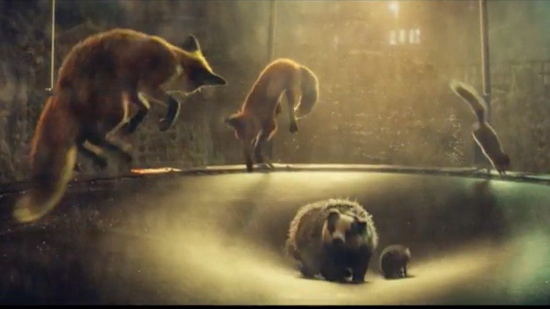 Woodland animals bouncing on the trampoline. Photo: John Lewis