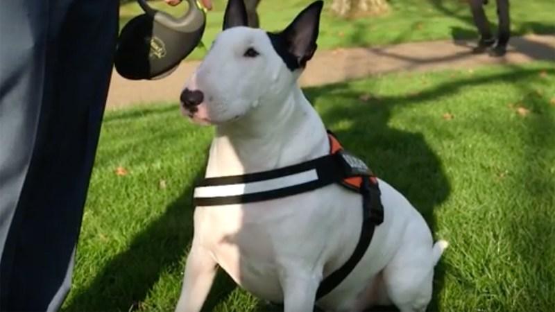 Scunthorpe Lincolnshire Dog Training