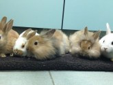Baby bunnies dumped in box in Grimsby search for new fur-ever homes