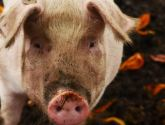 Pig's head left in Mablethorpe school playground