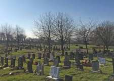 Family angry as dogs ruining local graves
