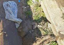 Police hunt cruel killer of dog drowned in river