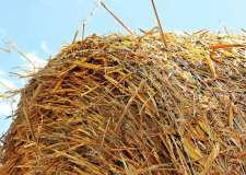 Lorry driver died after being hit by bale of straw, inquest told
