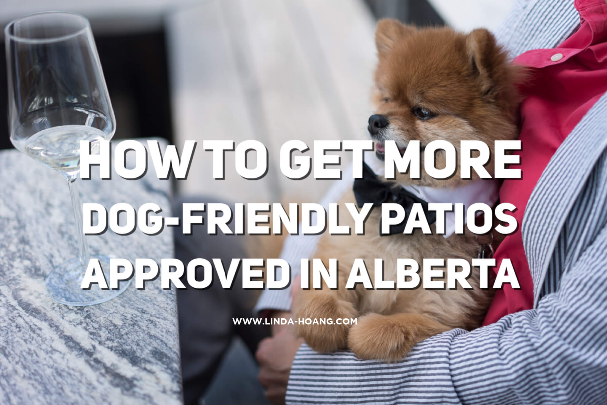 How To Get More Dog Friendly Patios Approved In Alberta   LINDA HOANG |  EDMONTON BLOG