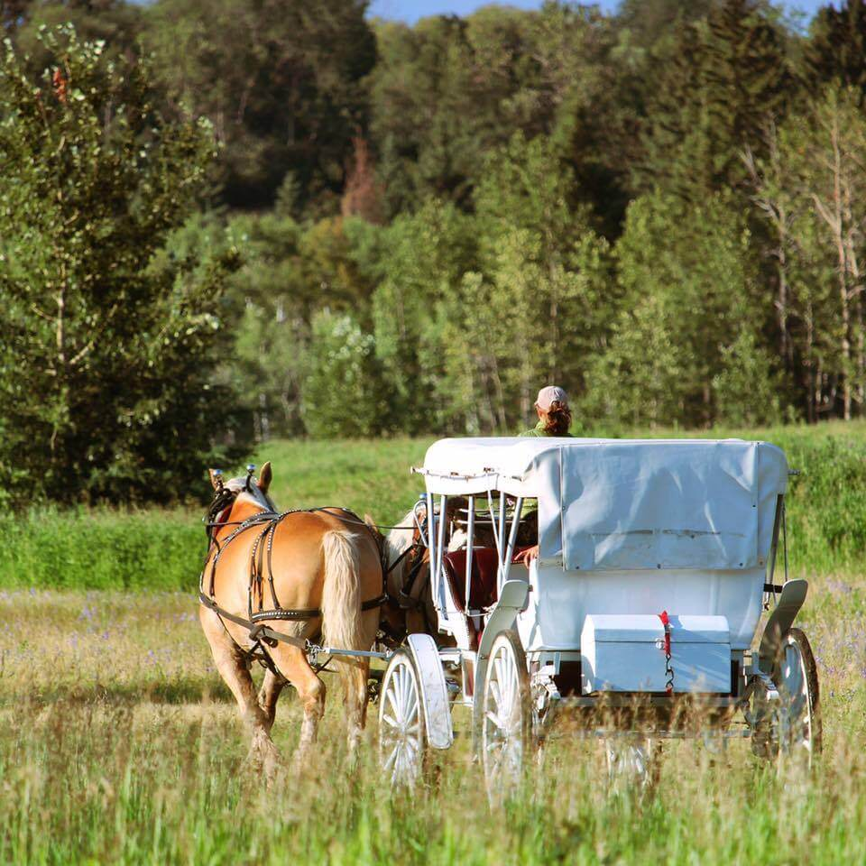 Heritage Ranch Horse Carriage Ride