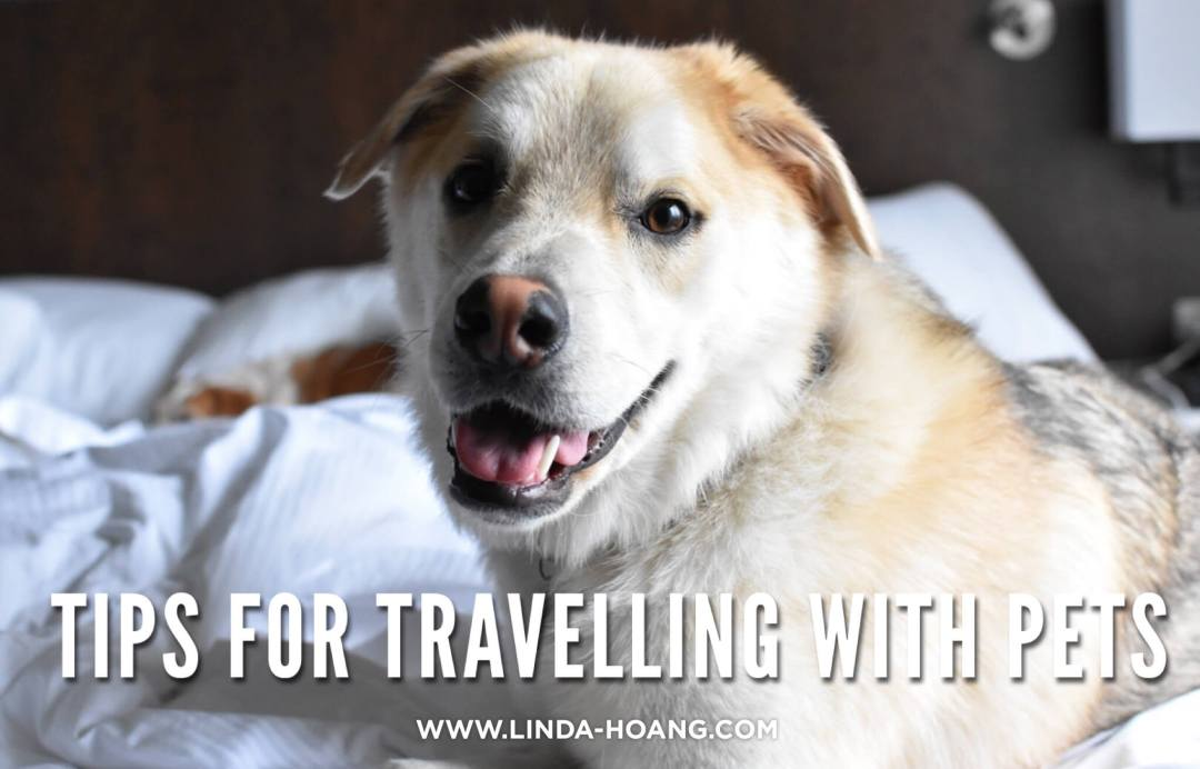 Tips for Travelling with Pets Dogs Edmonton