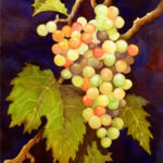 "Still Life paintings : On the Vine, Watercolor still life painting of a cluster of grapes on the vine by Linda Abblett. Original 11"" x 15"" $700; giclee same size as original $75"