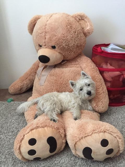 puppy on a giant teddy bear