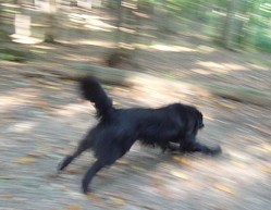 Maggie Runs
