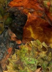 """""""Leaves After Delacroix,"""" woodland banner by Steven Durland"""
