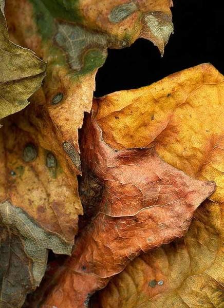 multi-leaves008-800