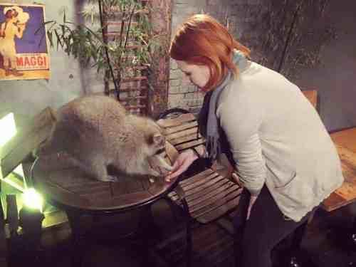 Blind Alley Raccoon Cafe   Linda Goes East