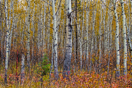 Autumn in the Cariboo-1-2