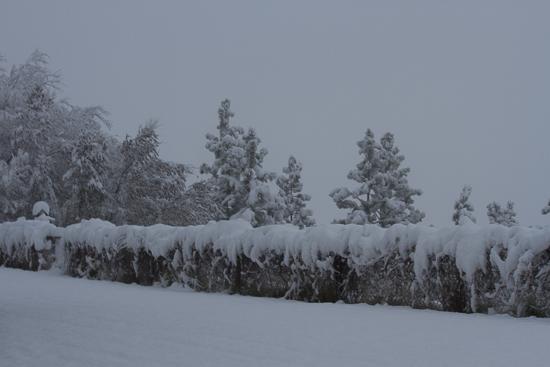 November Snow-1-5