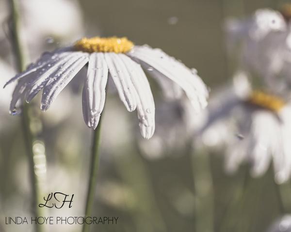 2015-06-28 Daisy Day-1-7