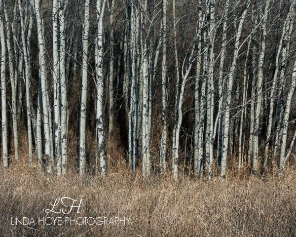 Woods-1-4 (600x480)
