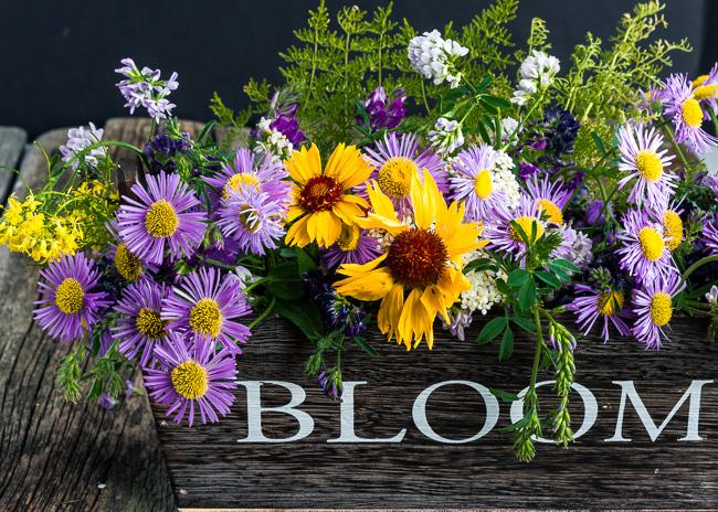 2016-06-14 Bloom-1-4