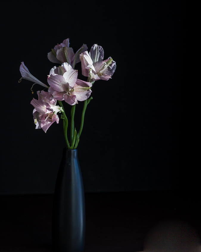 2017-01-03-pink-flowers-in-dark-3947