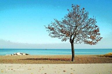 Van Wagner's Beach