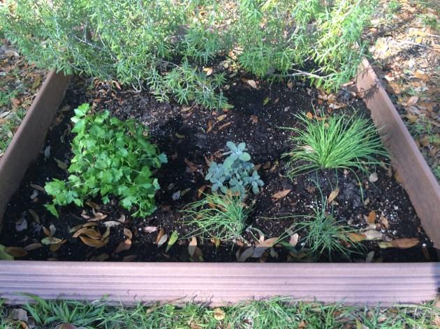 Planting Springtime Herbs