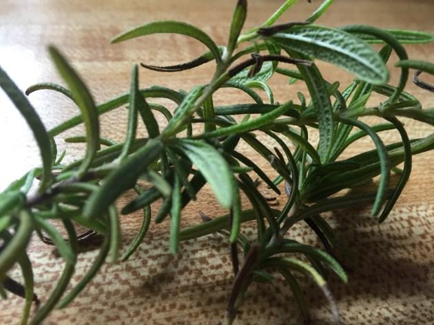 Rosemary (2)